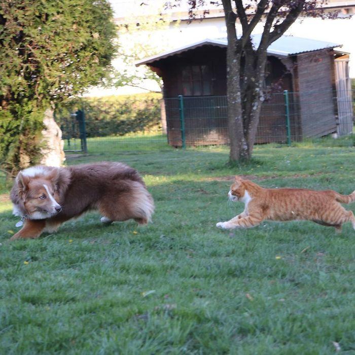 Снимки о непростых отношениях между кошками и собаками