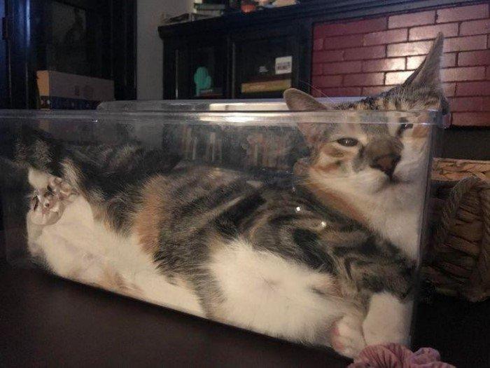 Эти котики спят и сидят где хотят, и никто им не указ