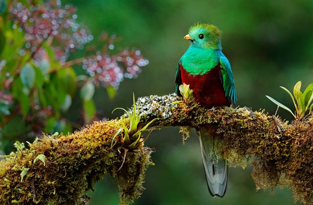 Бывает ли седина у птиц или они не доживают до старости?