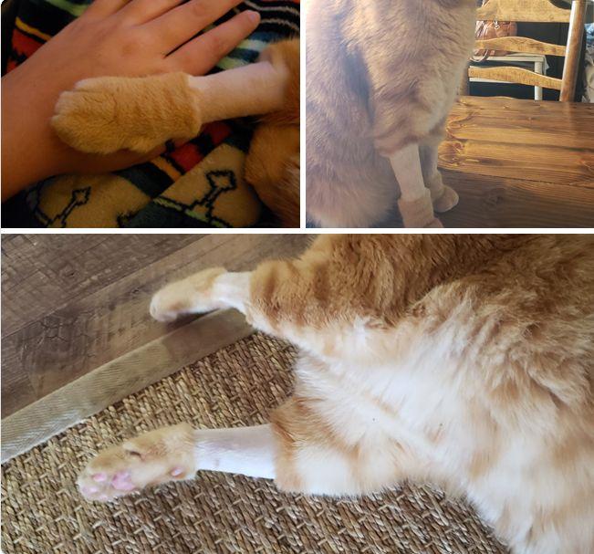 Милые котики, которых побрили перед операцией