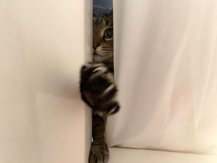 Этим котикам плевать на личное пространство хозяев Животные