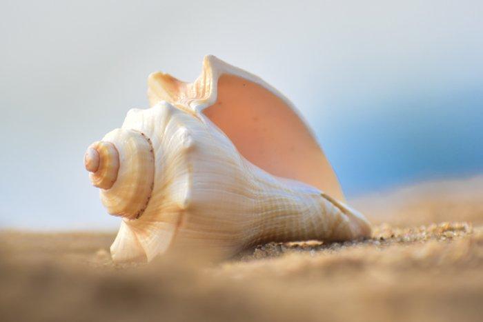 Почему в раковине слышится шум моря