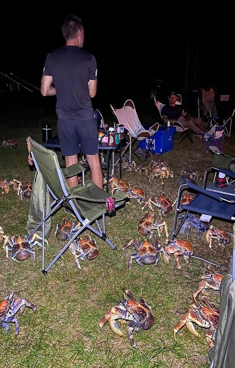 Семью окружили крупные крабы в кемпинге на австралийском острове