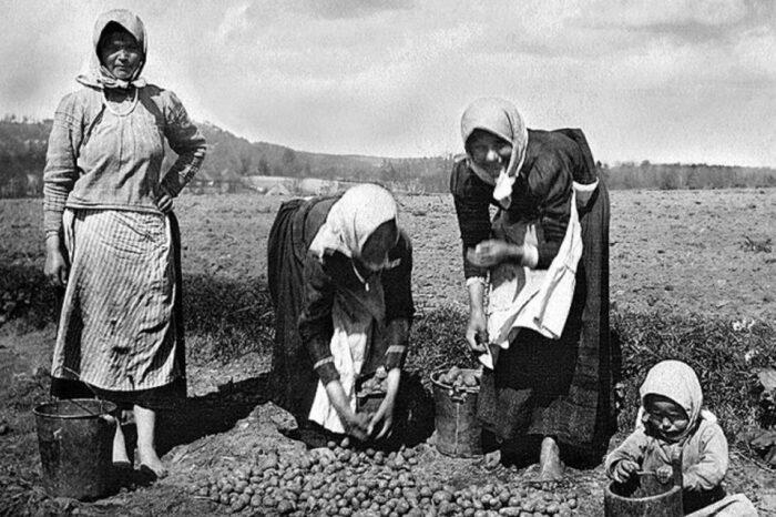 Картофельные бунты на Руси и почему крестьяне боялись корнеплода