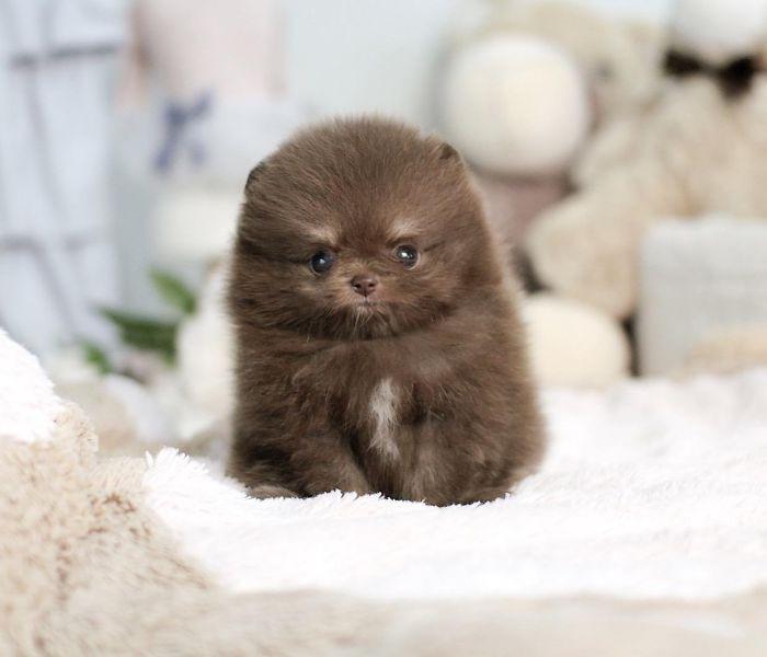 Милые щенки, которые свои видом поднимут настроение