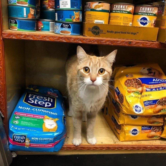 Забавная подборка котиков, которые поселились в магазинах