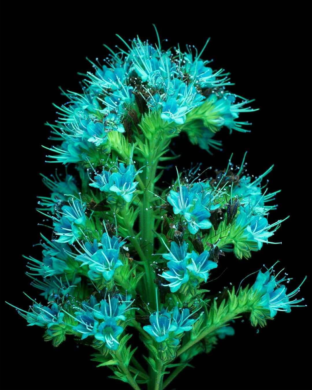 Флуоресцирующие цветы и растения на снимках Крейга Бэрроуза