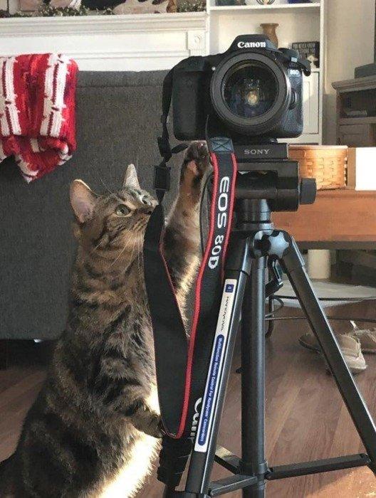 Котики, которые ответственно подходят к своей работе