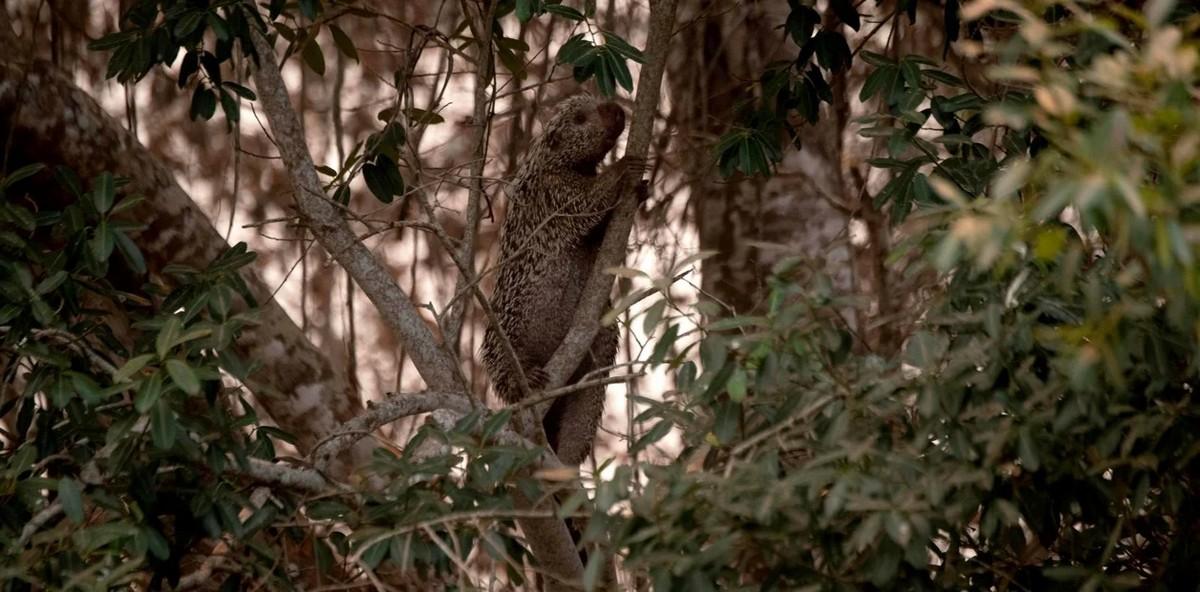 Как пожары в Пантанале разрушают среду обитания редких видов животных