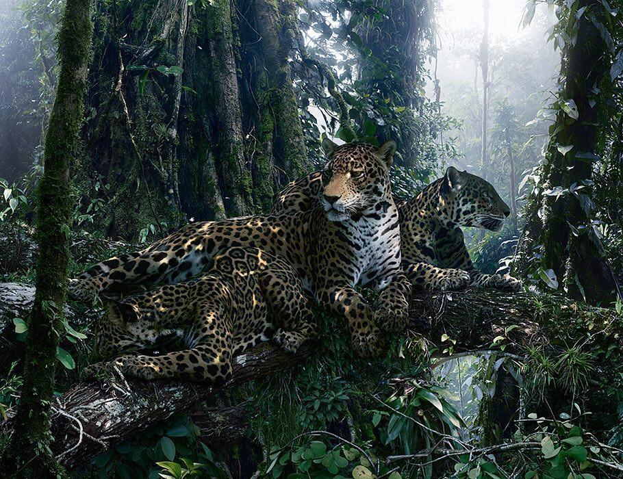 Красота мира животных на снимках Симена Йохана