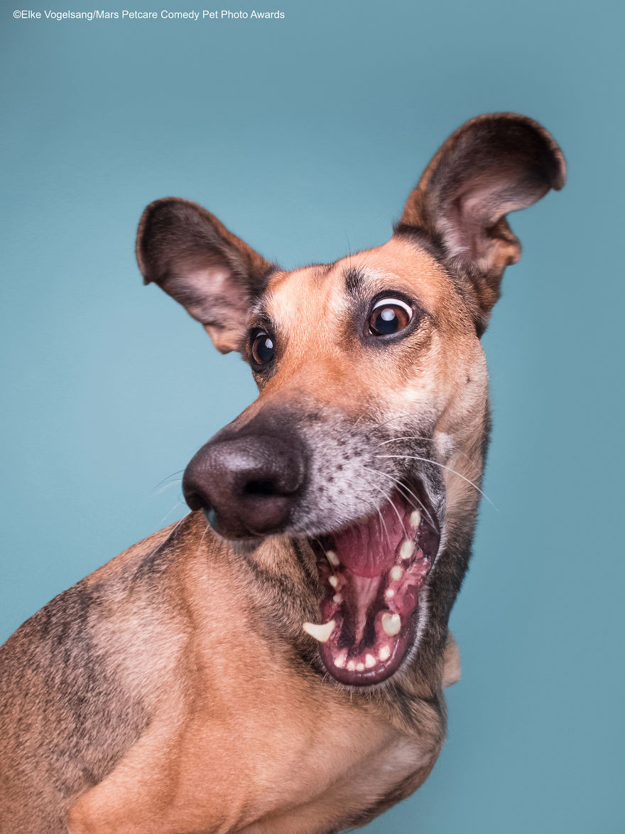 Работы финалистов конкурса на самую смешную фотографию с домашним животным 2020