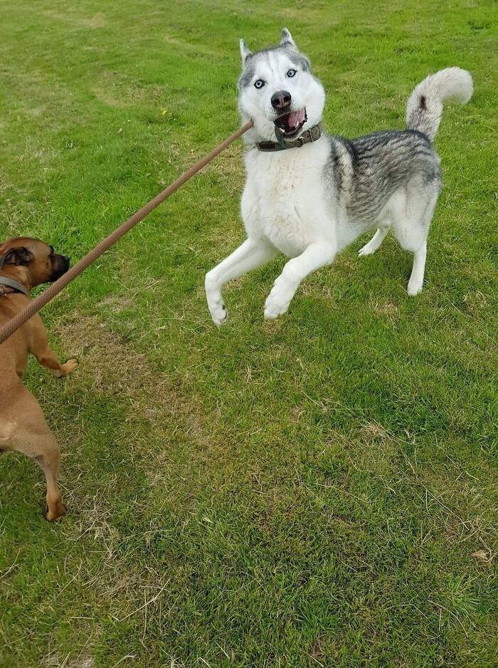 Забавные неудачные снимки собак, которые не должны были попасть в сеть Животные