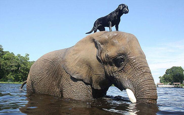 Эти животные подтверждают, что поддержка — самое ценное в жизни