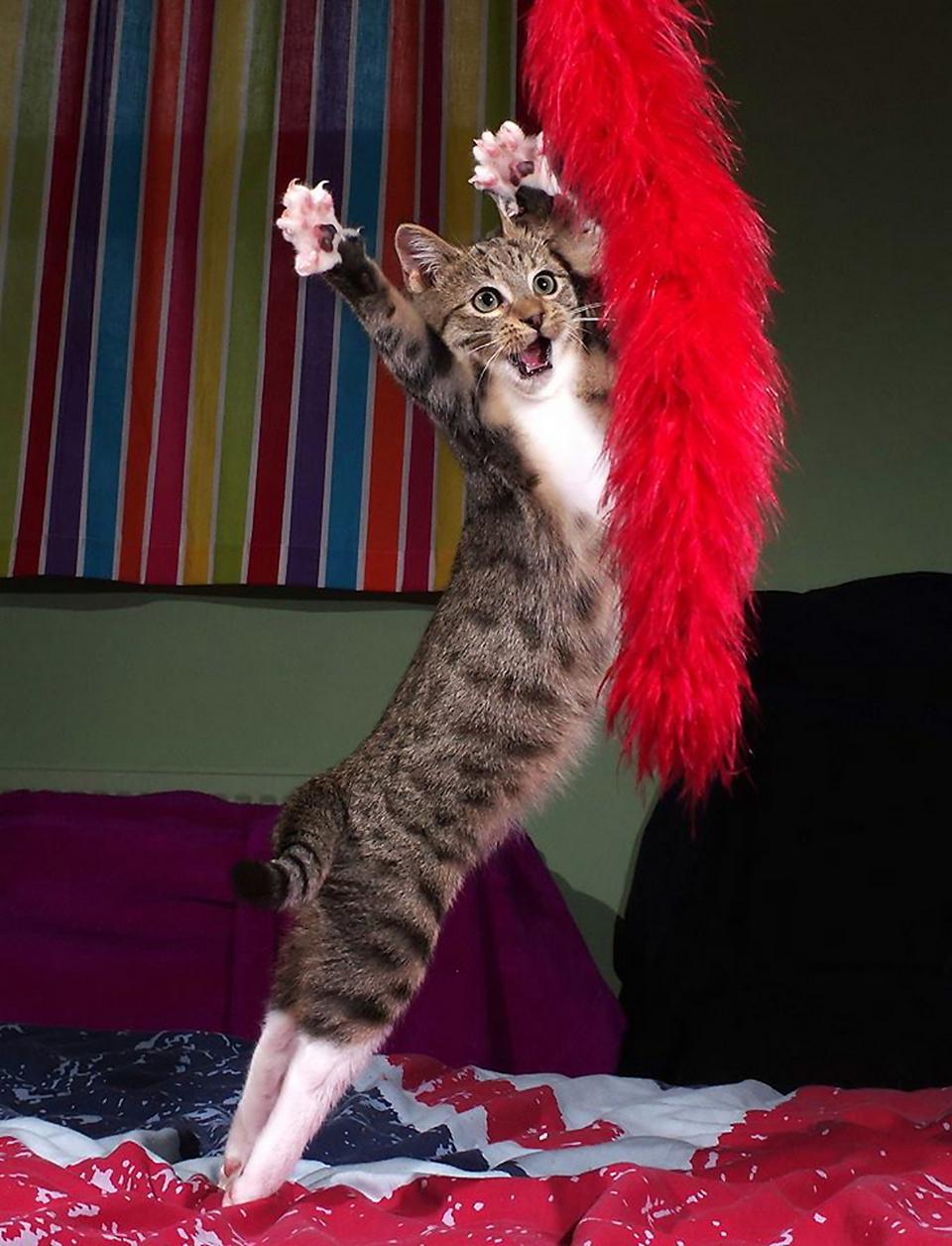 Финалисты фотоконкурса домашних животных Comedy Pet Photography Awards 2020