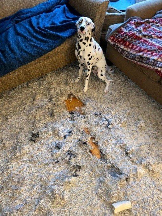 У домашних животных тоже бывают плохие дни