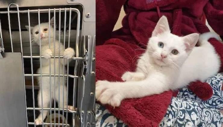 Животные до и после того, как добрые люди подарили новый дом