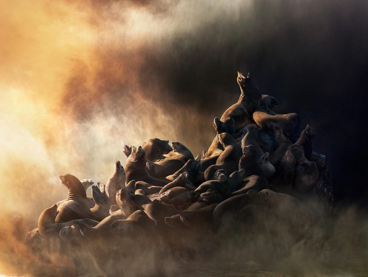 Дикие животные в фотоработах Симена Йохана