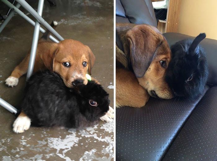 Дружба между разными животными на снимках