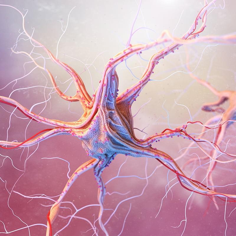 Удивительные факты о нервной системе человека