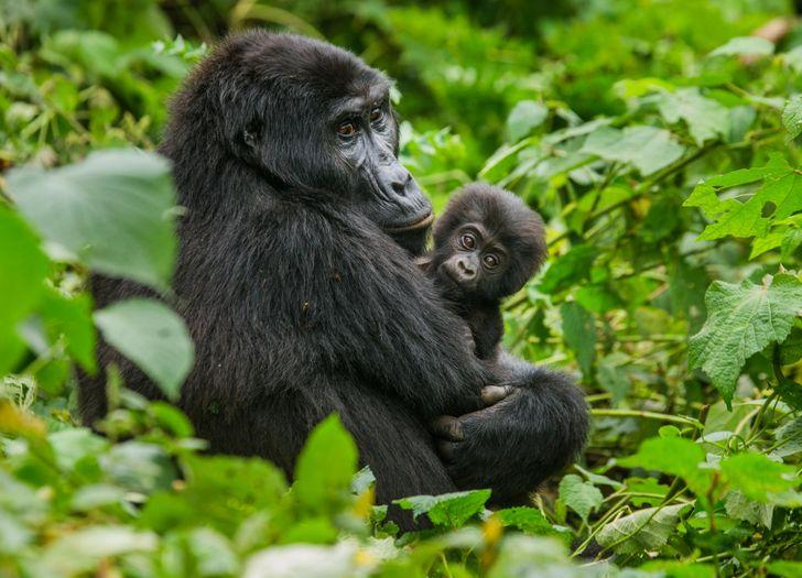 Животные, которые существуют на Земле дольше людей