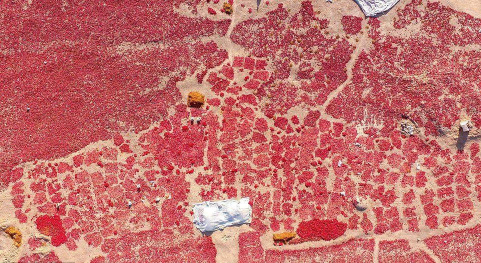 Сушка перца чили в Китае