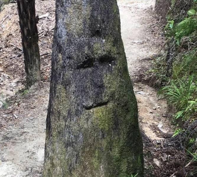 Иногда видишь лица даже там, где их нет…