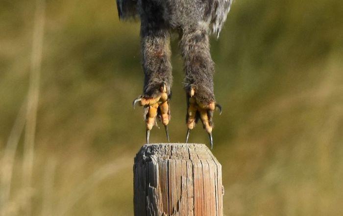 Неудачные фотографии животных, которые не так уж и плохи