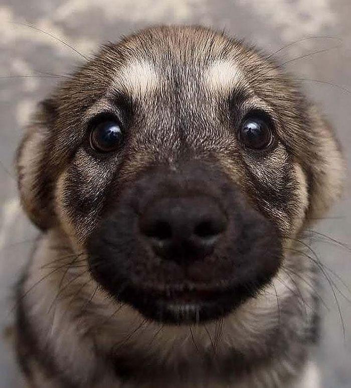 Милые щенята заряжают позитивом