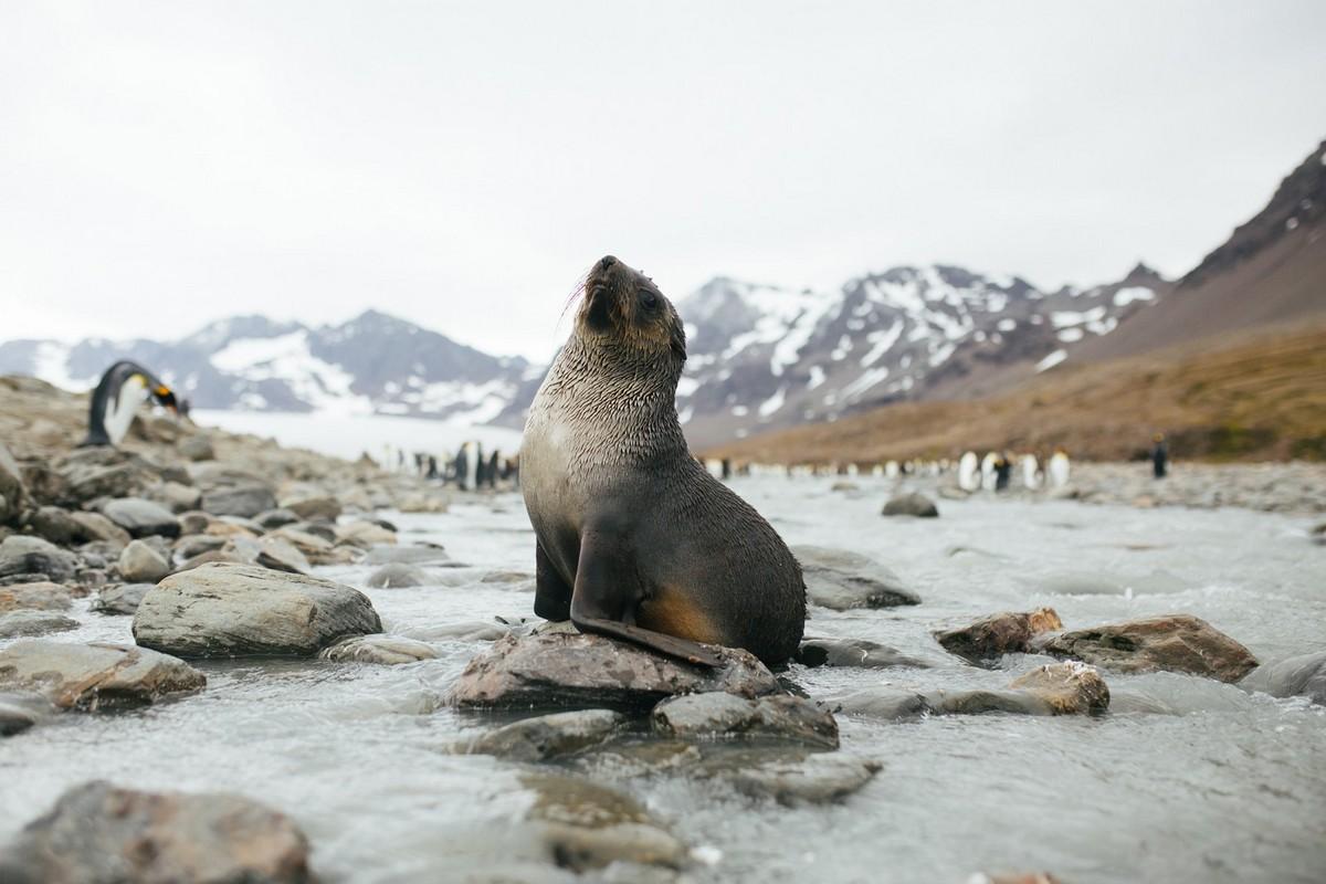 Путешествия по Антарктике и Арктике на снимках Джона Бозинова