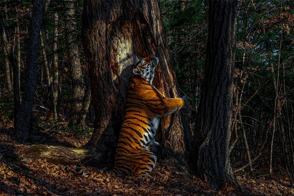 Победители конкурса на лучшую фотографию дикой природы 2020 года