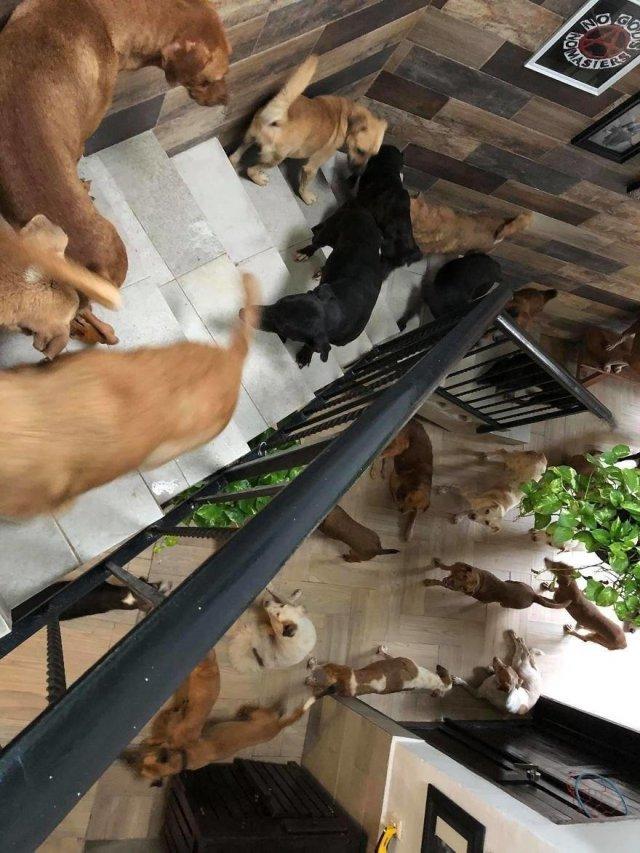 Работник мексиканского приюта спас от урагана 300 кошек и собак