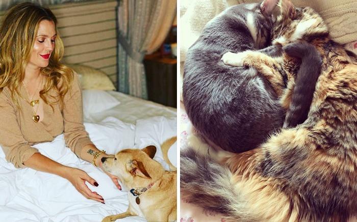 Знаменитости, которые взяли животных с улиц и из приютов