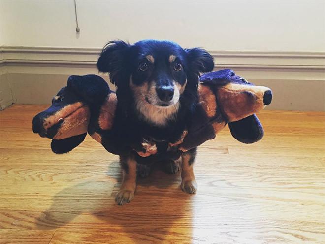 Церберы — костюмы для собак на Хэллоуин