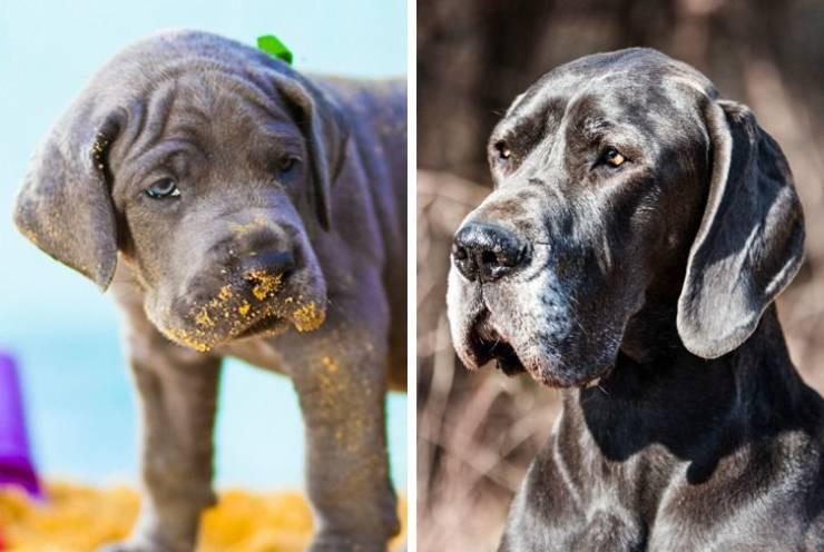 Как выглядят собаки и щенки разных пород