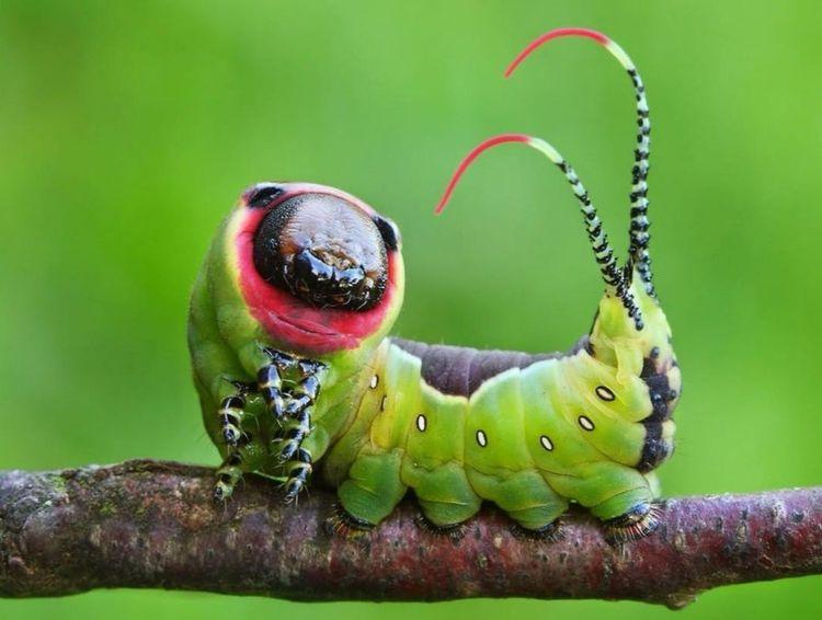Подборка интересных фото о природе со всего мира