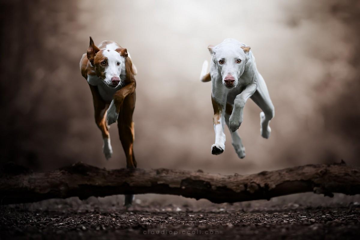 Пёсики парят над землёй на снимках Клаудио Пикколи