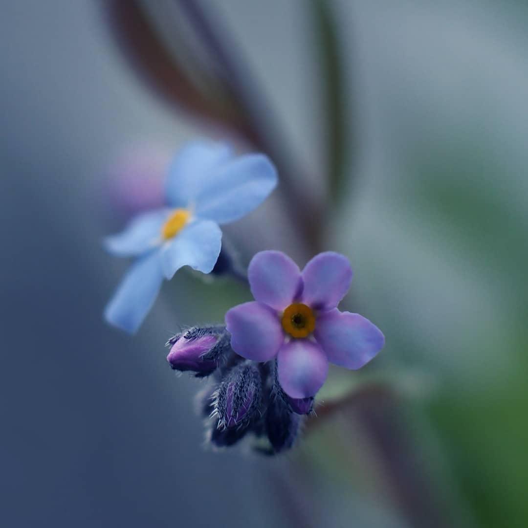 Красота цветов на снимках от Рэнди Нюстрём