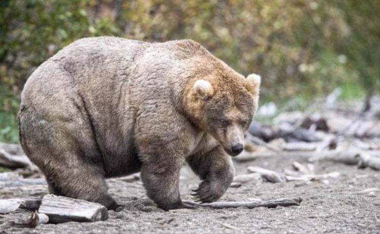 Снимки гигантских животных, которые переплюнули своих сородичей