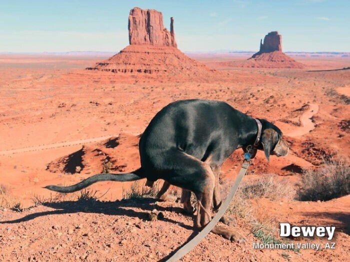 Юмористический календарь с какающими собаками на 2021 год