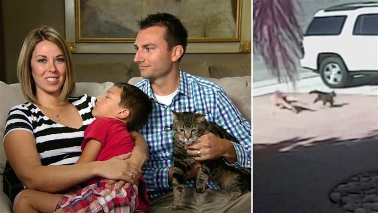 Героические кошки, которые спасли жизнь людям