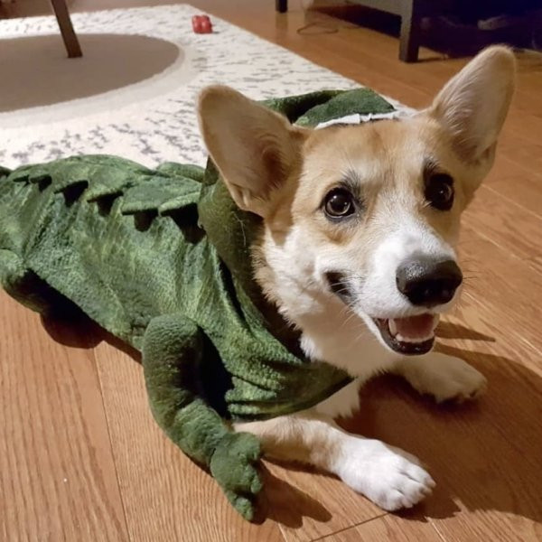 Классные костюмы на Хэллоуин для людей и их питомцев