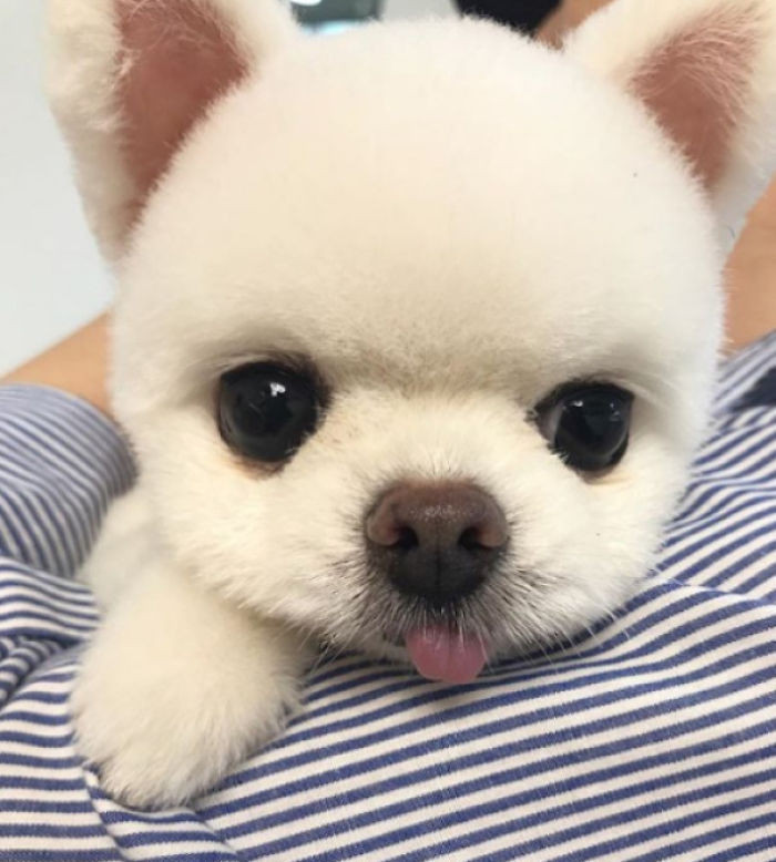 Милые и очаровательные щенята заряжают позитивом
