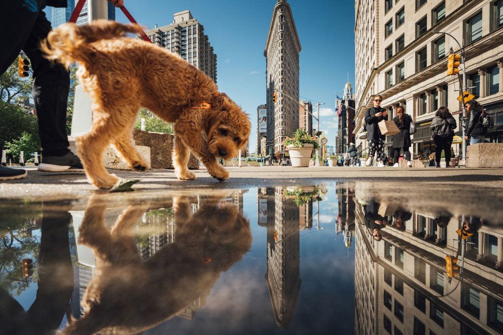 Фотоконкурс Siena International Photo Awards 2020