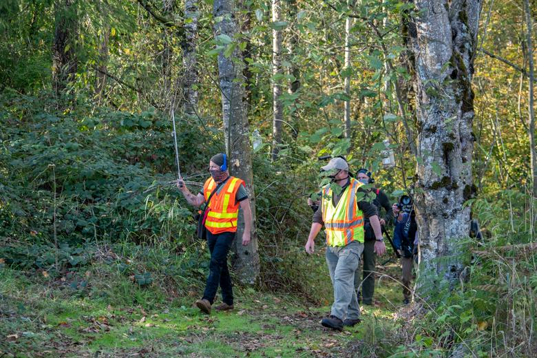 Гнездо азиатских шершней-убийц уничтожили в Вашингтоне