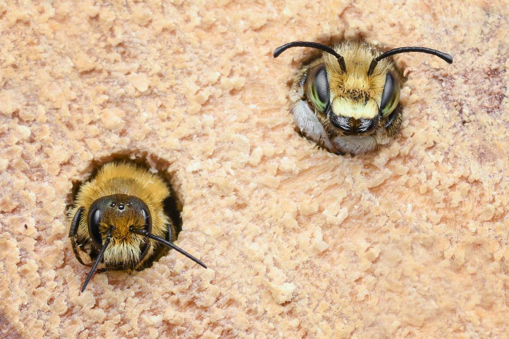 Победители фотоконкурса жуков Luminar Bug Photographer 2020