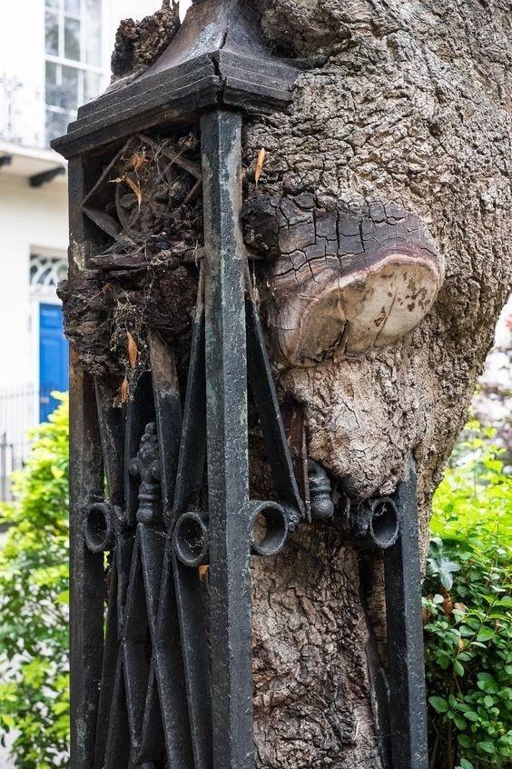 Деревья, которые медленно поглощают нашу цивилизацию