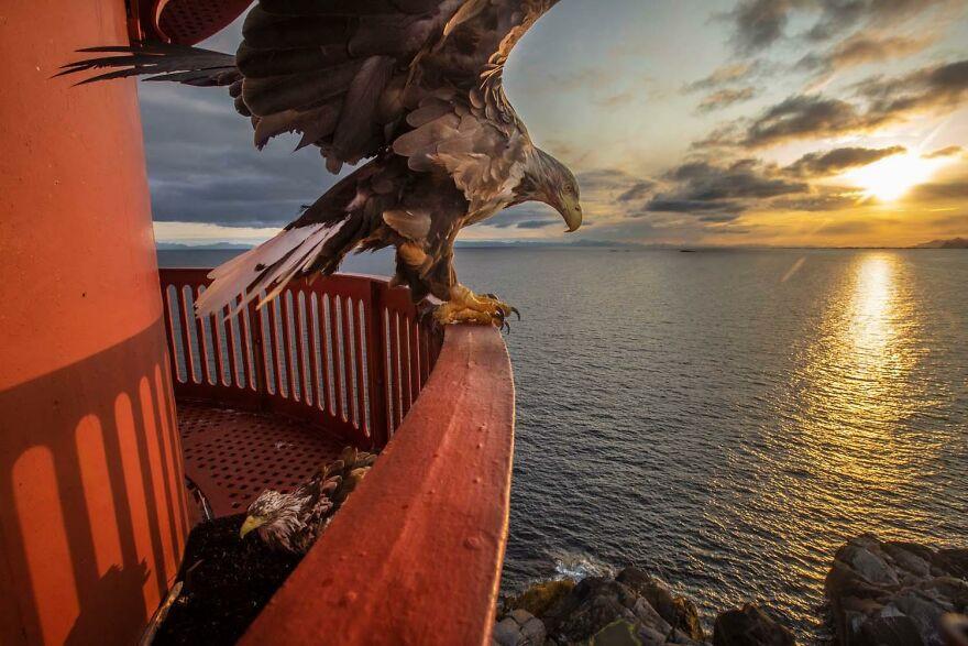 Конкурс на лучшего европейского фотографа дикой природы 2020 года