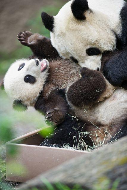 Мамы с детёнышами из мира животных