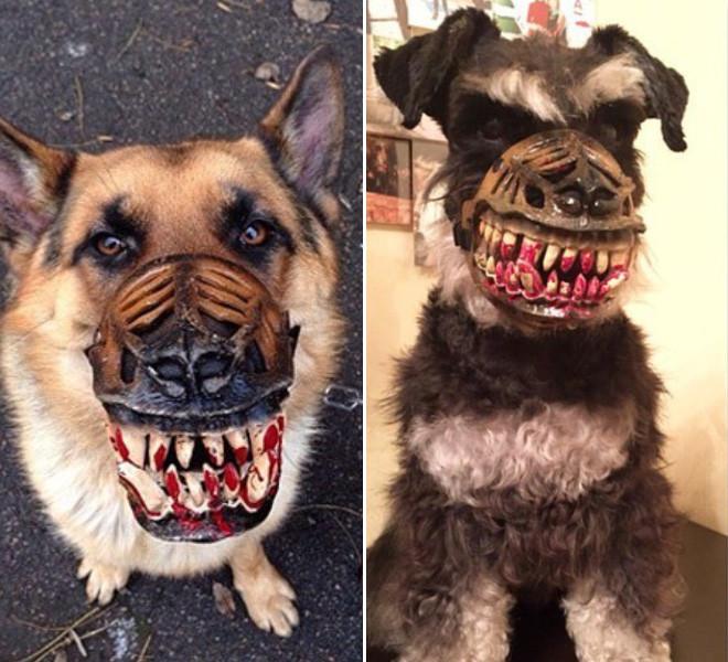 Жутковатый намордник для собак на Хэллоуин