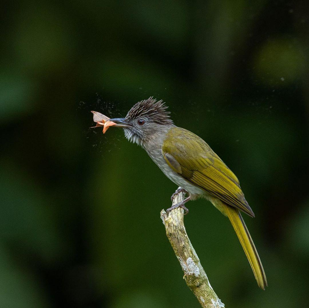 Птицы и дикие животные на снимках Чарльза Райана Животные